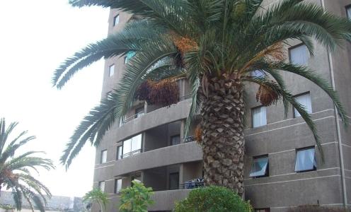 Amplio Departamento en Venta Condominio Las Palmas en Departamentos y Oficinas Departamento en Venta en Venta Departamentos y Oficinas